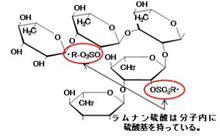 ラムナン硫酸とは?