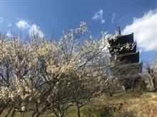 梅は咲いたか、桜は・・・