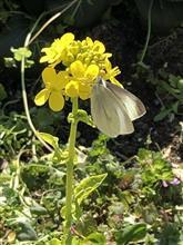 庭に蝶々がやって来た