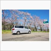 桜を見に行きたい