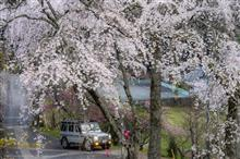 桜ドライブ 身延山久遠寺