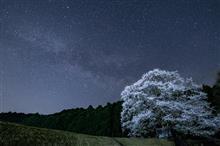 星降る山里の一本桜
