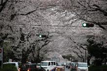 2箇所目の「桜見物」に…