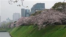 今年の桜はもう終わりか・・・