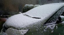 忘雪 降るぞ降るぞと言われてやっぱり降った。