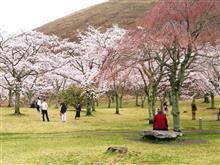 桜の里 つかの間の春散歩