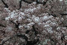 東京でも雪 2020-03-29
