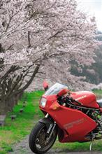 春霖の明ける頃、 晴れたら外に出よう。