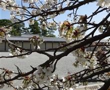 京都御苑を散策しました!
