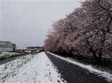 雪と桜と…
