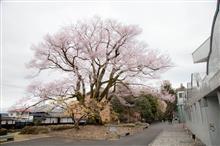 2020の桜