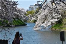 桜・東京・千鳥ヶ淵・満開を過ぎてそろそろ散り始め