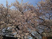 花は咲き川は流れる ~人の営みなんぞはちっぽけなもんよ~