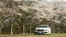 桜ドライブ2020