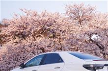桜🌸2020