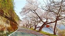2020 桜お花見ツーリング