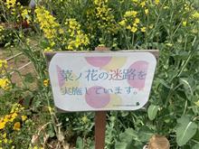 菜の花の迷路