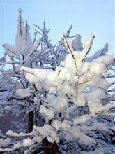 春(晩冬?)の雪