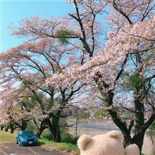 桜とWRX、、東京の桜もそろそろ葉桜ですね