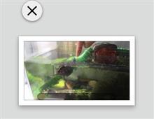 【Mac】アイコンに☓マークがでたら、Finderのリセットで直る
