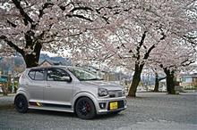 長瀞町の桜④