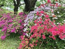 桜の季節が終わっても🌸
