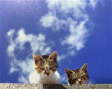やや初夏の青空見上げると猫😸