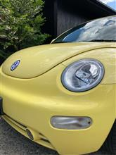 Conservation and restoration of new beetle