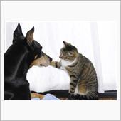チョコの誕生日 猫と犬の親子 ...