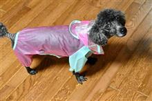 生まれて初めてレインコートを着た犬