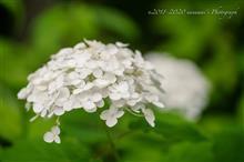 梅雨曇りの花散歩 SCENE1