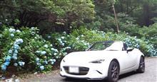 Be an ND driver!Enjoy blue hydrangea beautifully blooming of the rainy season @ Mts . Rokko🗻縦走記(前編)