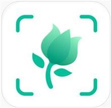 植物図鑑。