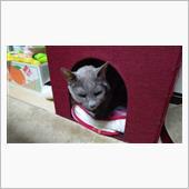 あ~あ~叱られてる  #猫  ...