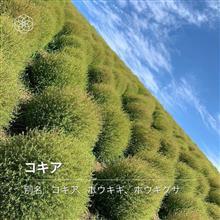 Go To 茨城 ~2日目~