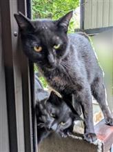 我が家の猫事情 14