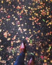 足元から深まる、秋田の秋🍁