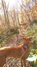 紅葉のなかをきなハイキング。