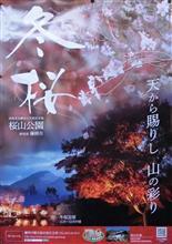 三波石と共に名高い冬桜