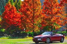 秋に心・・・ (  ´・ω)