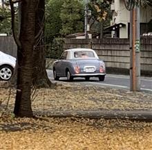 銀杏の木の向こうにフィガロが