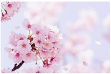 春ですねー(前編)