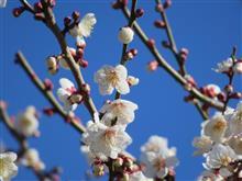 小さい春のお便り・・・かな?【出掛け】