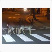 鹿とLEDの話