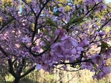 桜を見に、海老10丼にも挑戦(笑)