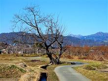 くるみの木 その150