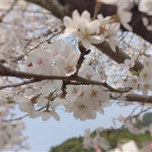 【シェアスタイル】🌸今年のお花見STYLE🌸
