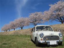 過去の桜!
