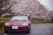 雨桜とロードスター