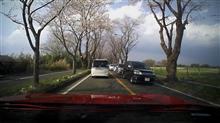 横浜海軍道路の桜並木満開です。(ドラレコ映像)